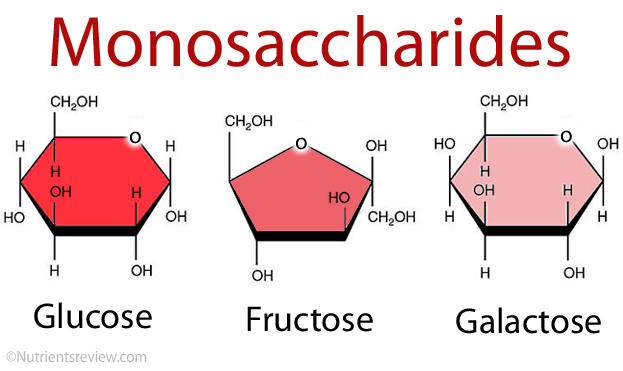 Monosaccharides Simple Sugars Definition List Examples Of Foods