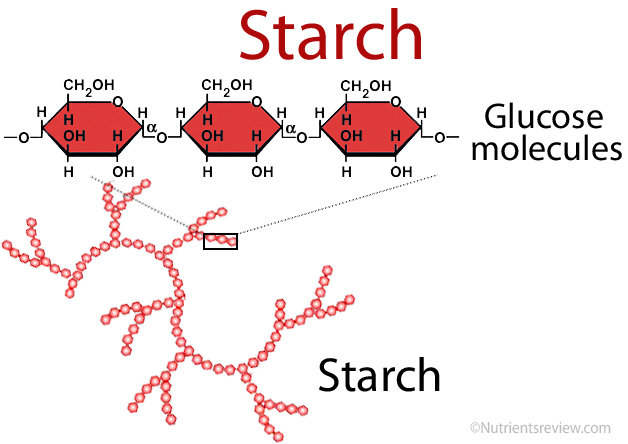 Starch structure image
