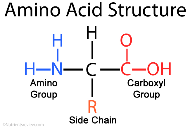 Amino acid dating definition