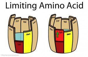 Limiting amino acid picture