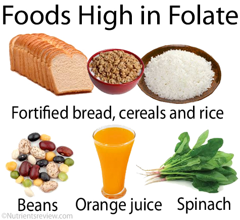 Foods with folate and b12