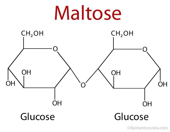 Image result for maltose jpg